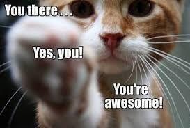 You'reAwesomeCat.jpg