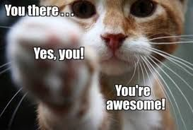 You'reAwesomeCat.jpg
