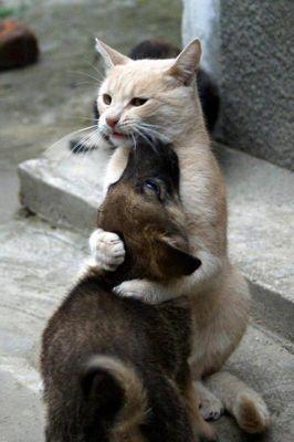 dog-cat-friendship.jpg